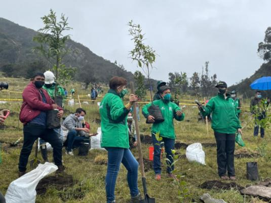 Diez mil árboles restaurarán ecosistemas de Mochuelo Bajo