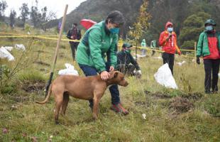 Distrito siembra 10 mil árboles en Mochuelo Bajo